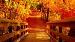 Foliage d'autunno: 10 luoghi dove ammirare i colori più belli