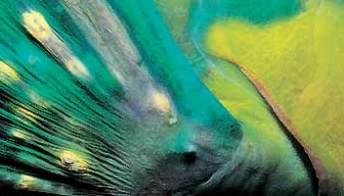 Un arcobaleno di colori sotto il mare