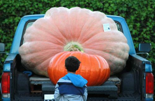 Zucca Di Halloween Piu Grande Del Mondo.California La Zucca Piu Grande Del Mondo Foto 1 Di 6 Siviaggia