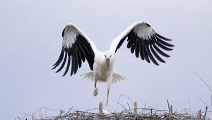 004-volo-cicogna