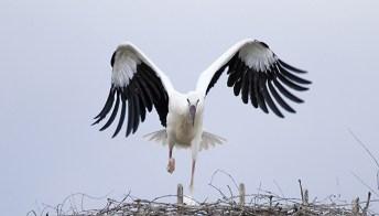 A Oltremare i cicognini hanno imparato a volare