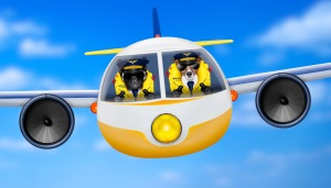 piloti-t