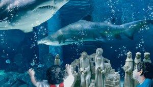 Presepe-tra-gli-squali