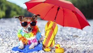 vacanze-animali-t