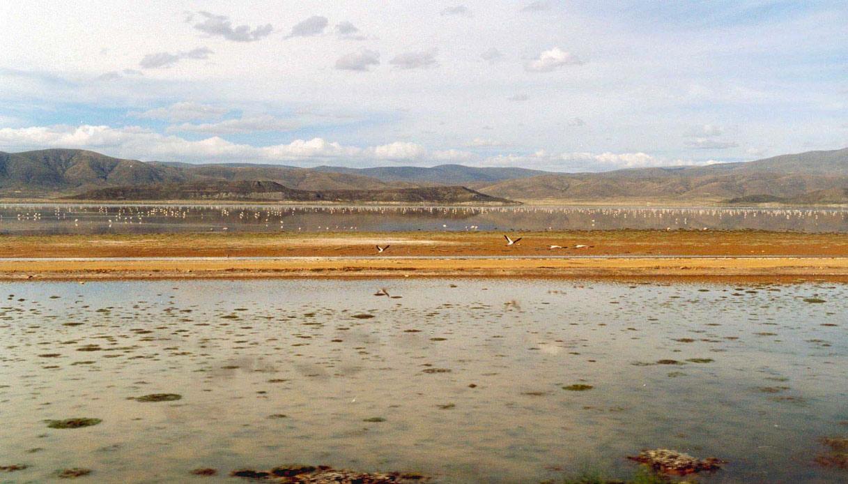Lago_Poopó_con_flamencos-@olivier-hodac