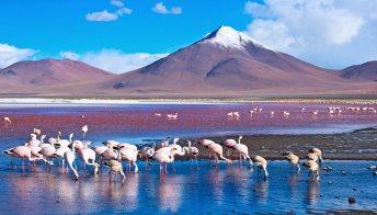 Salar de Uyuni: viaggio sul lago salato più grande del mondo