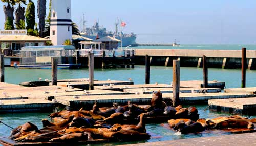 fisherman-s-wharf-san-francisco-t