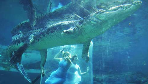 darwin-crocosaurus-cove-coccodrillo