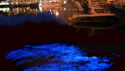 alghe-fluorescenti-trieste