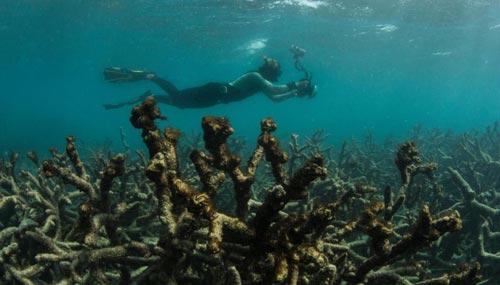 barriera-coralline-sub