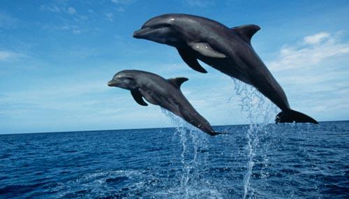 delfini-mediterraneo_th_500