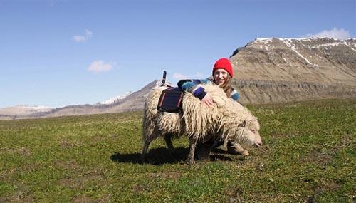 faroe-island-sheep-camera_500_2
