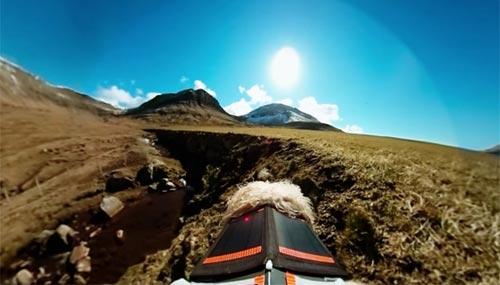 faroe-island-sheep-camera_500_3