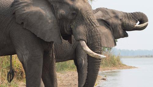 malawi-elefanti_th_500