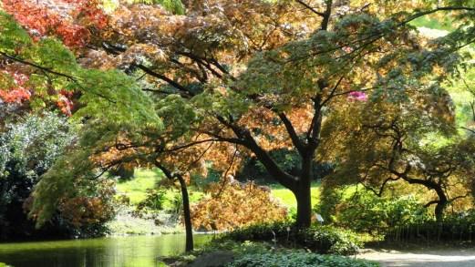 I colori del foliage d'autunno nei giardini italiani più belli