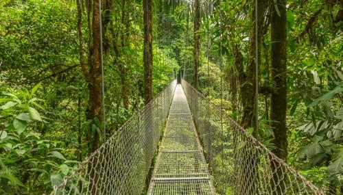 foresta-fluviale-monteverde-t