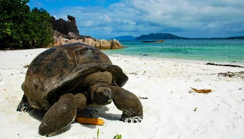 seychelles-tartaruga-t