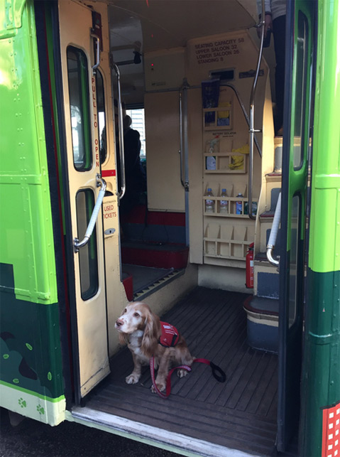 bus-cani-londra-1