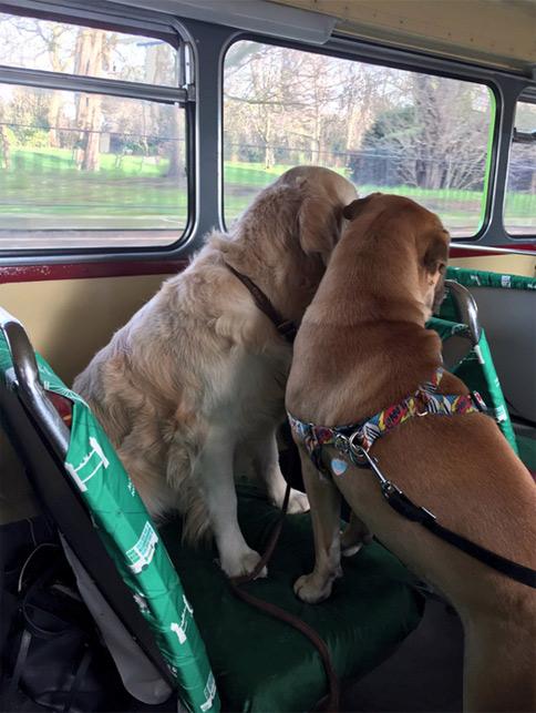 bus-cani-londra-2
