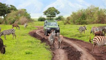 Come risparmiare quando si prenota un safari