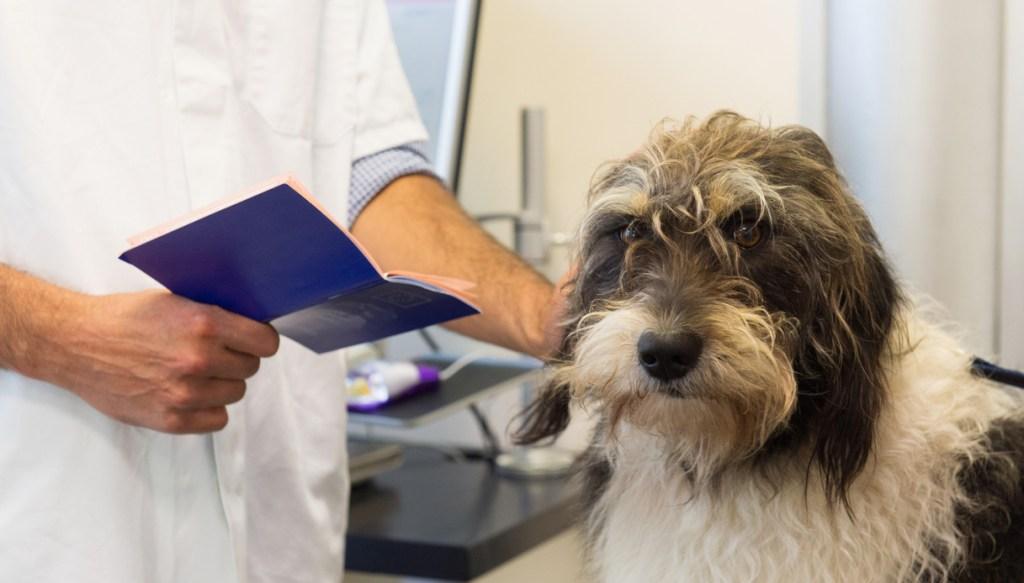 In vacanza con un animale: documenti necessari   SiViaggia