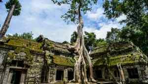 Tempio Ta Prohm