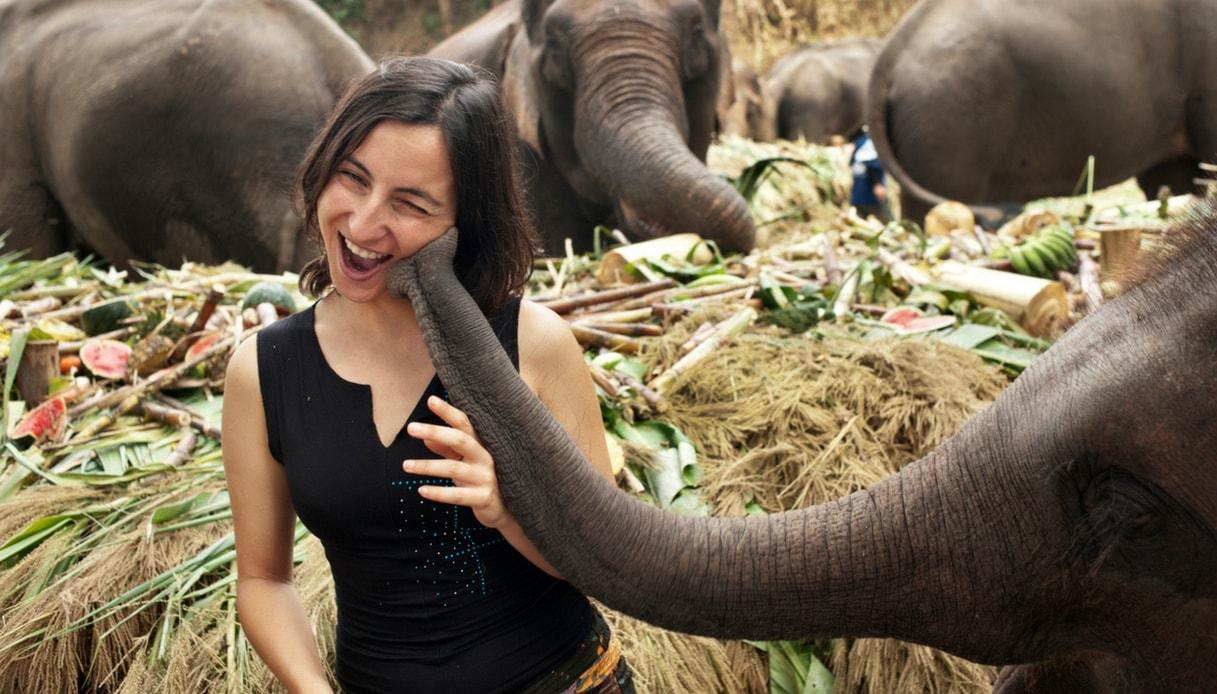 Curare gli elefanti della Thailandia
