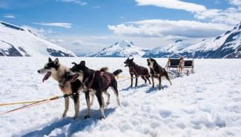 Alaska: alla scoperta del nord con una slitta trainata dagli husky