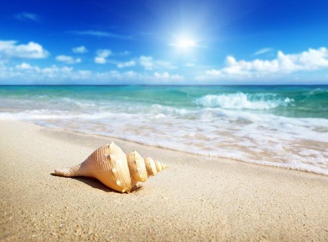 Una conchiglia sulla spiaggia
