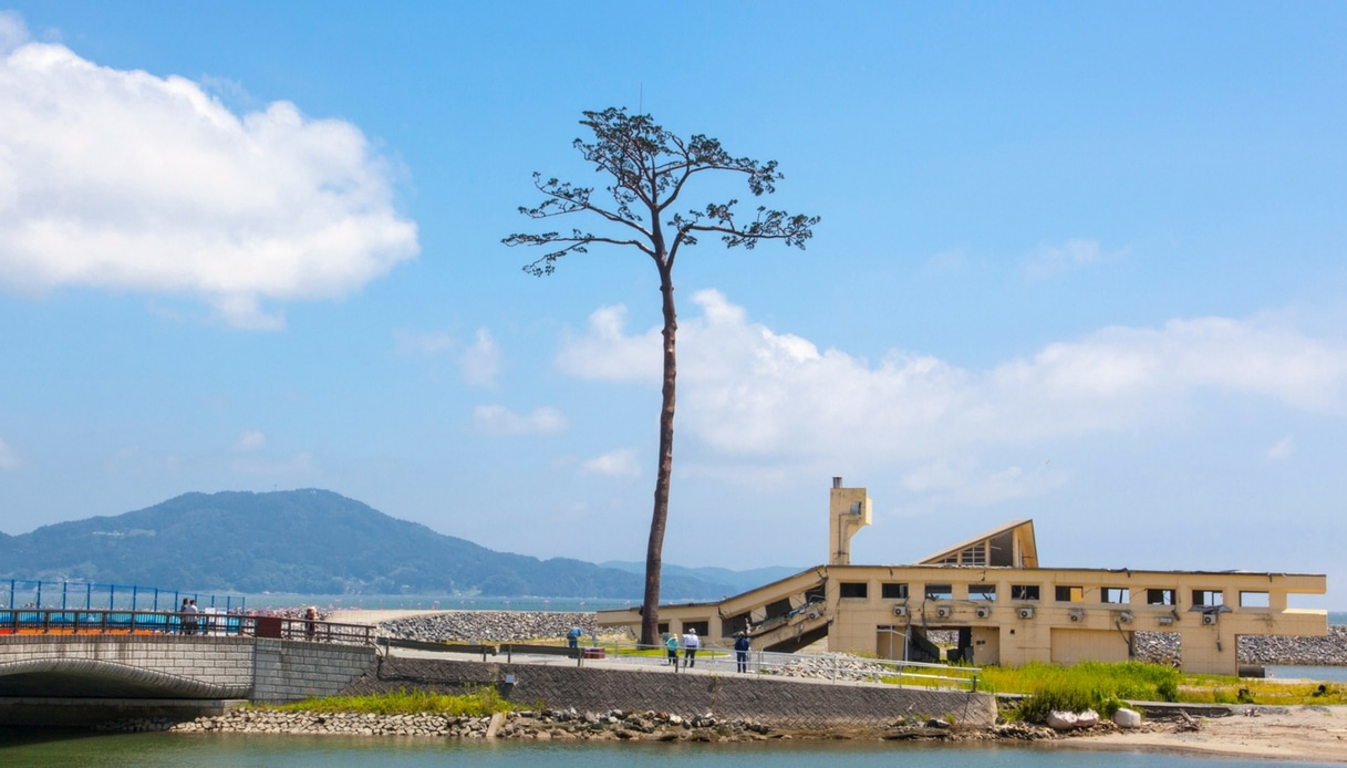 Miracle Pine Tree di Rikuzentakata