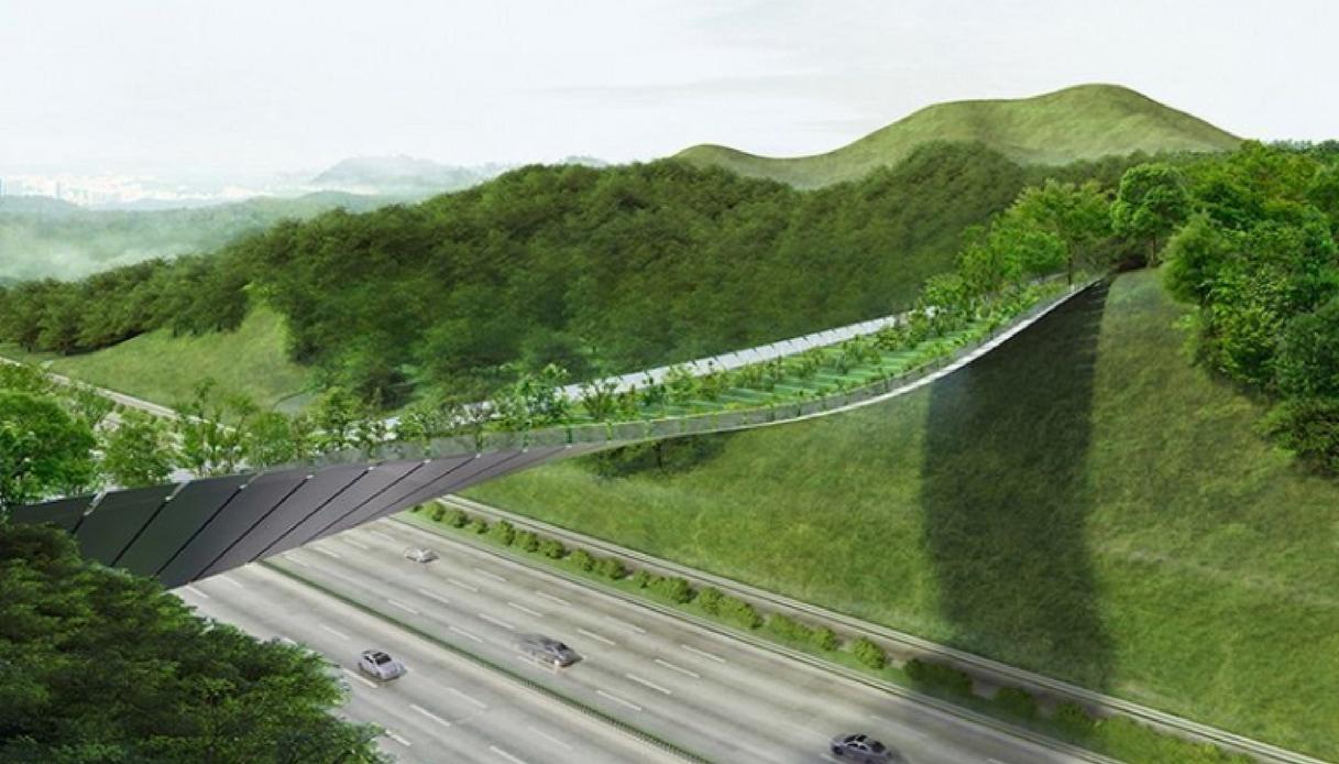 Yangjaegogae Eco Bridge: il ponte sospeso in Corea del Sud