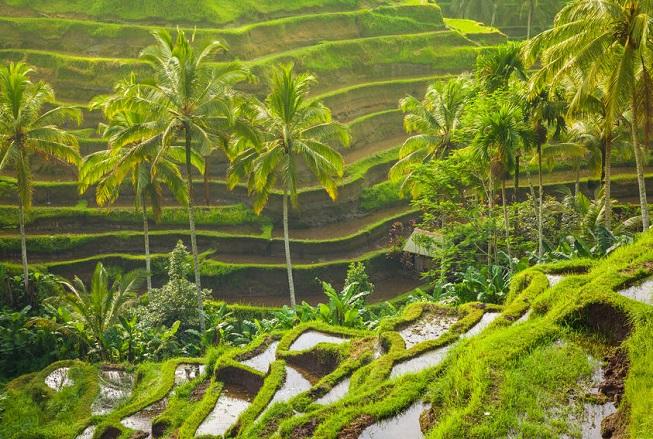 Le risaie di Tegallalang a Bali