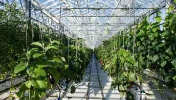 Si trova a L'Aja la rooftop farm più grande d'Europa