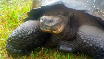 Sulle isole Galapagos, 4 giorni con le tartarughe giganti
