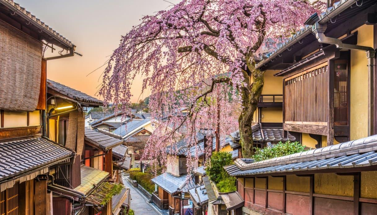 Sakura in fiore a Kyoto in Giappone