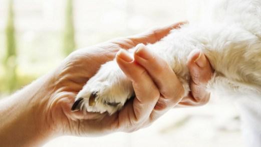 Pet Therapy in agriturismo: 5 strutture da non perdere