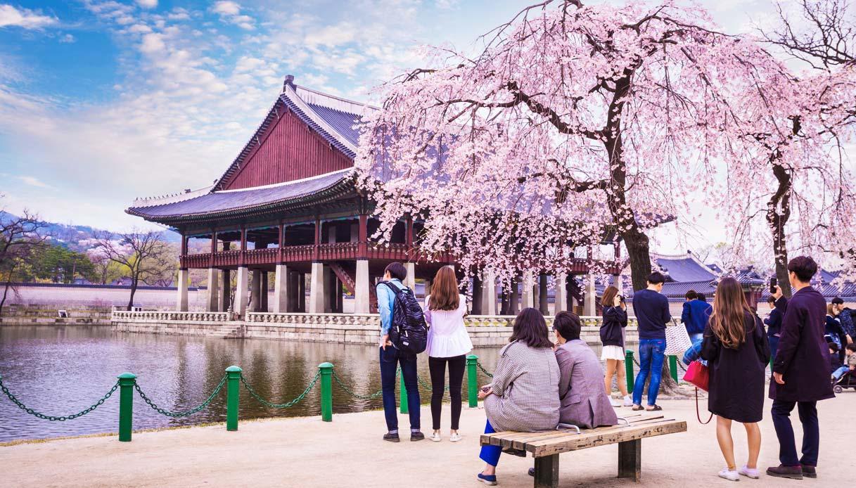 corea-primavera-ciliegi