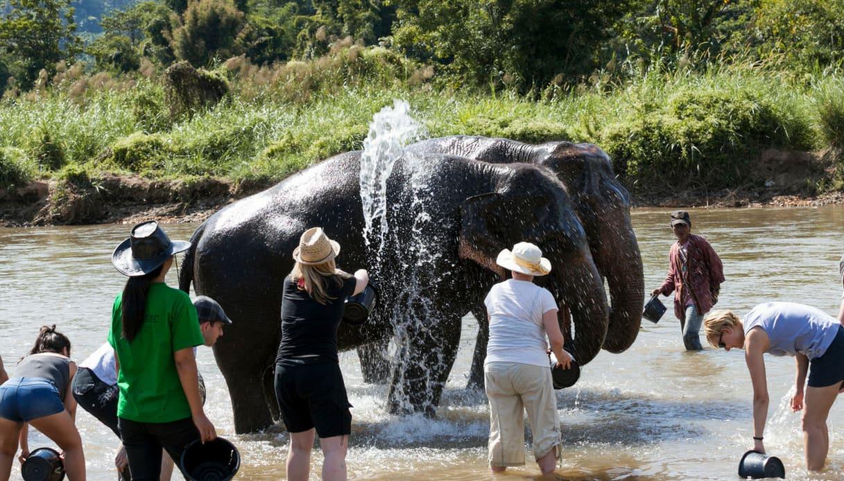lavaggio elefanti chiang mai