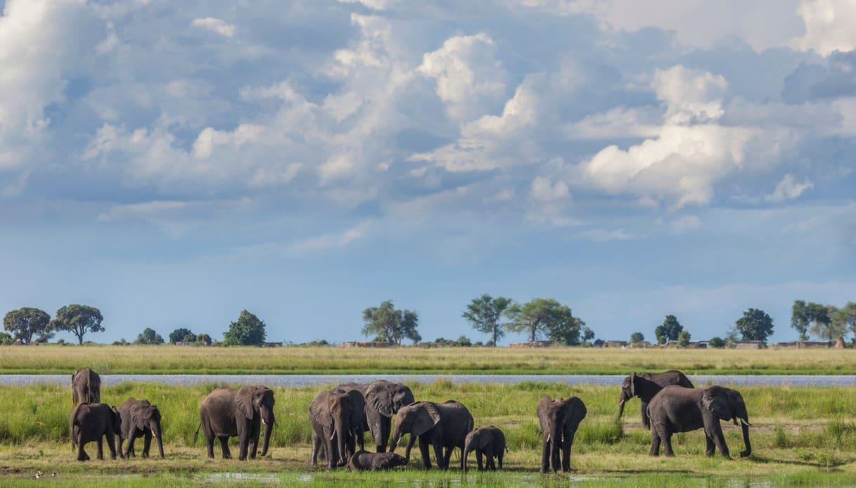 Cosa vedere in Botswana: il Parco Nazionale di Chobe