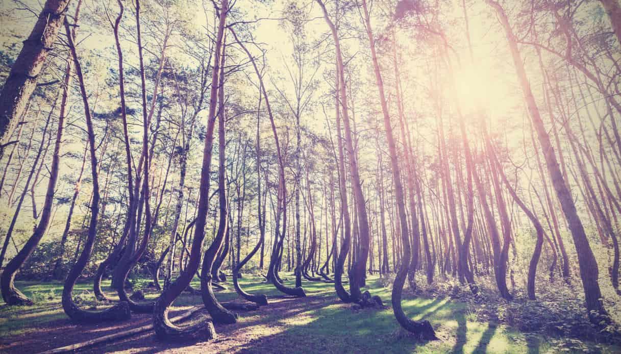 Foresta di Gryfino, Polonia