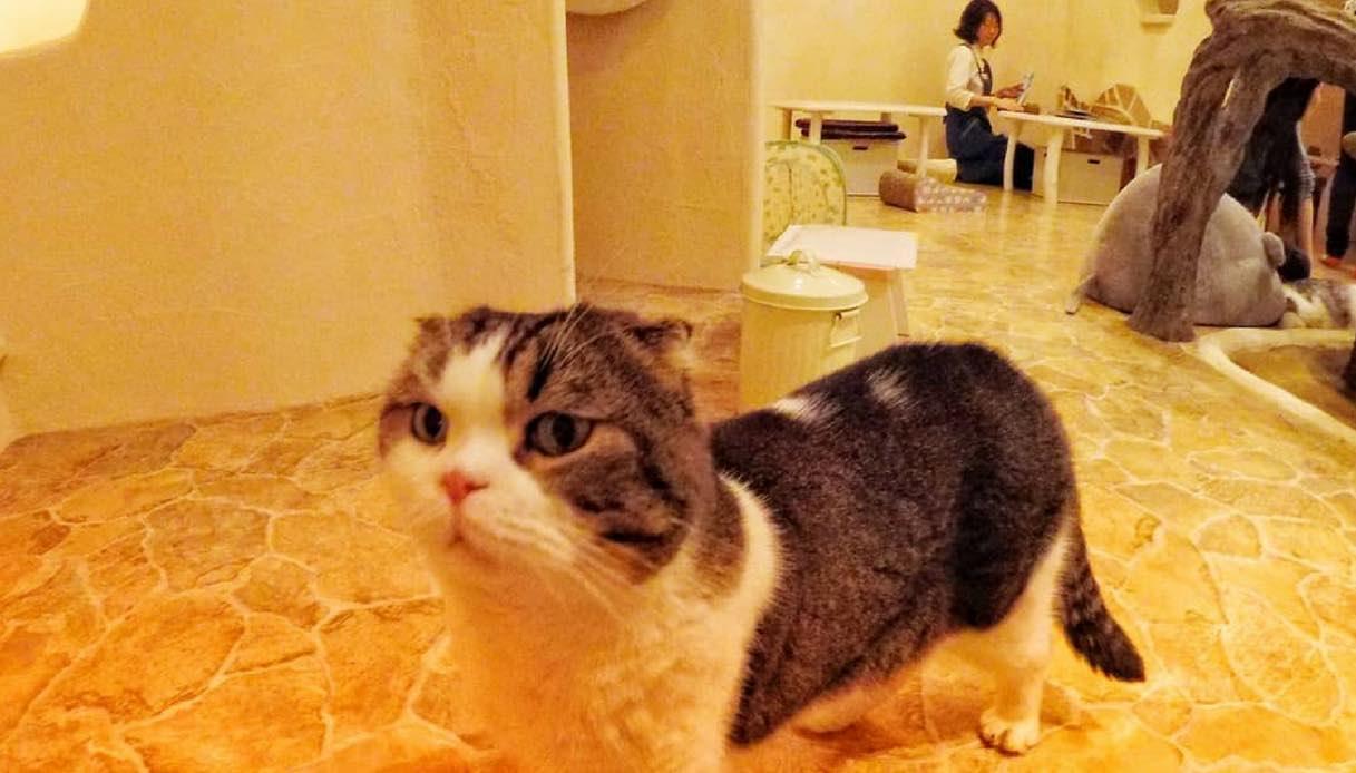 Tokyo: apre un'incredibile città tutta dedicata ai gatti