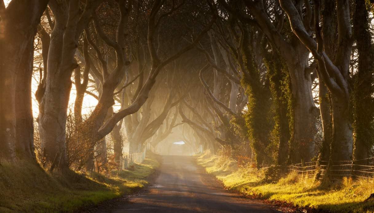 Irlanda: come arrivare a The Dark Hedges e cosa vedere nei dintorni