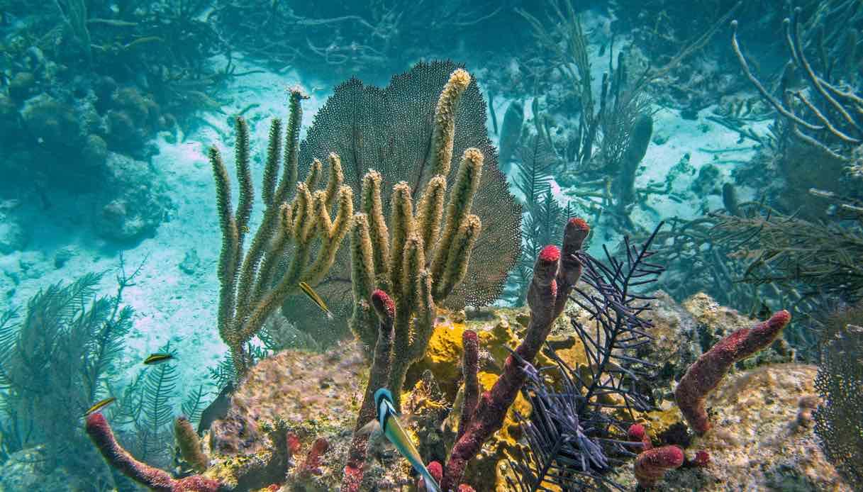 La barriera corallina del Belize non è più in pericolo