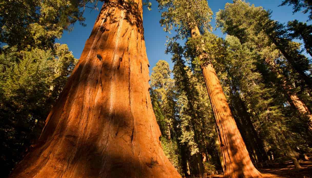 Yosemite Park: riapre al pubblico il Mariposa Grove
