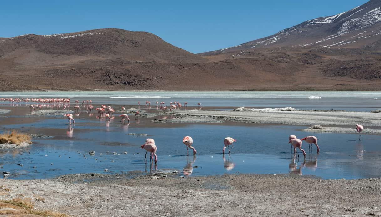 Laguna Chiarkhota
