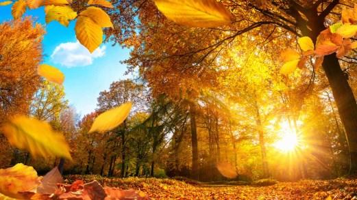 Foliage d'autunno in Italia, 5 mete da sogno