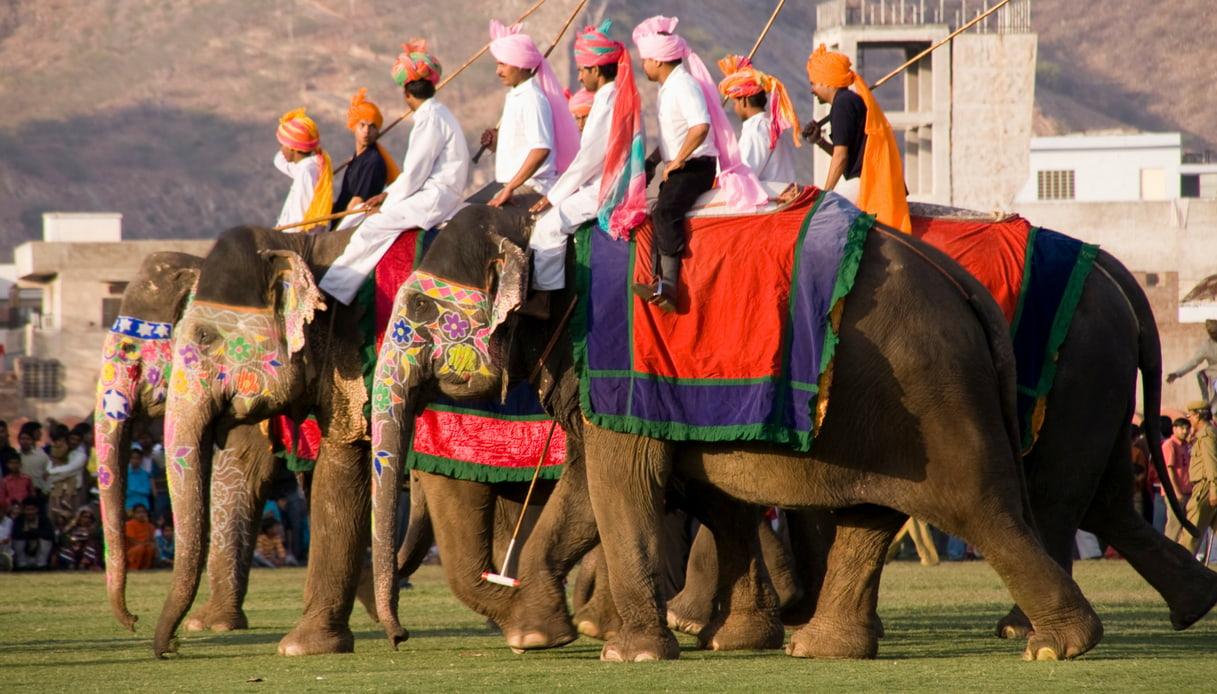 India Polo Elefanti