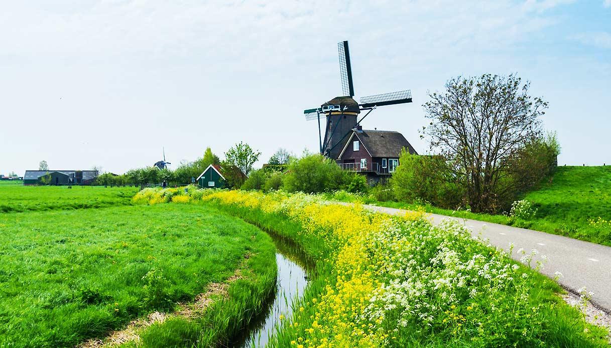 olanda-mulino