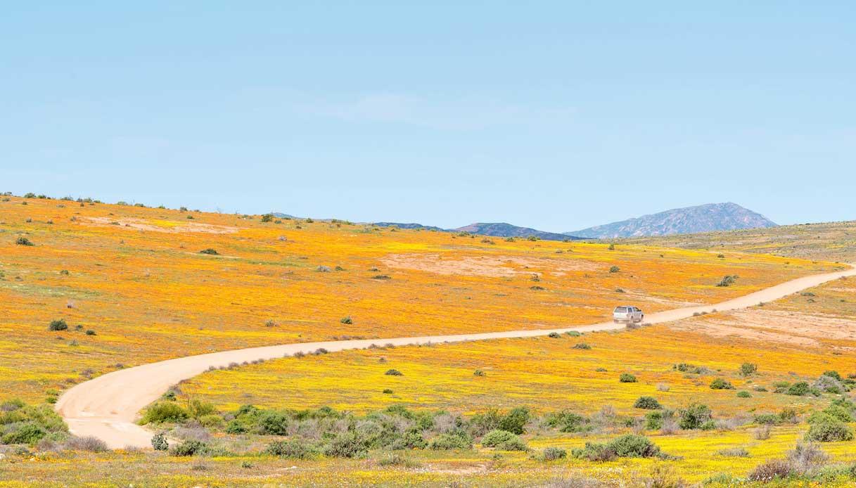 deserto-Namaqua-sudafrica-fiori