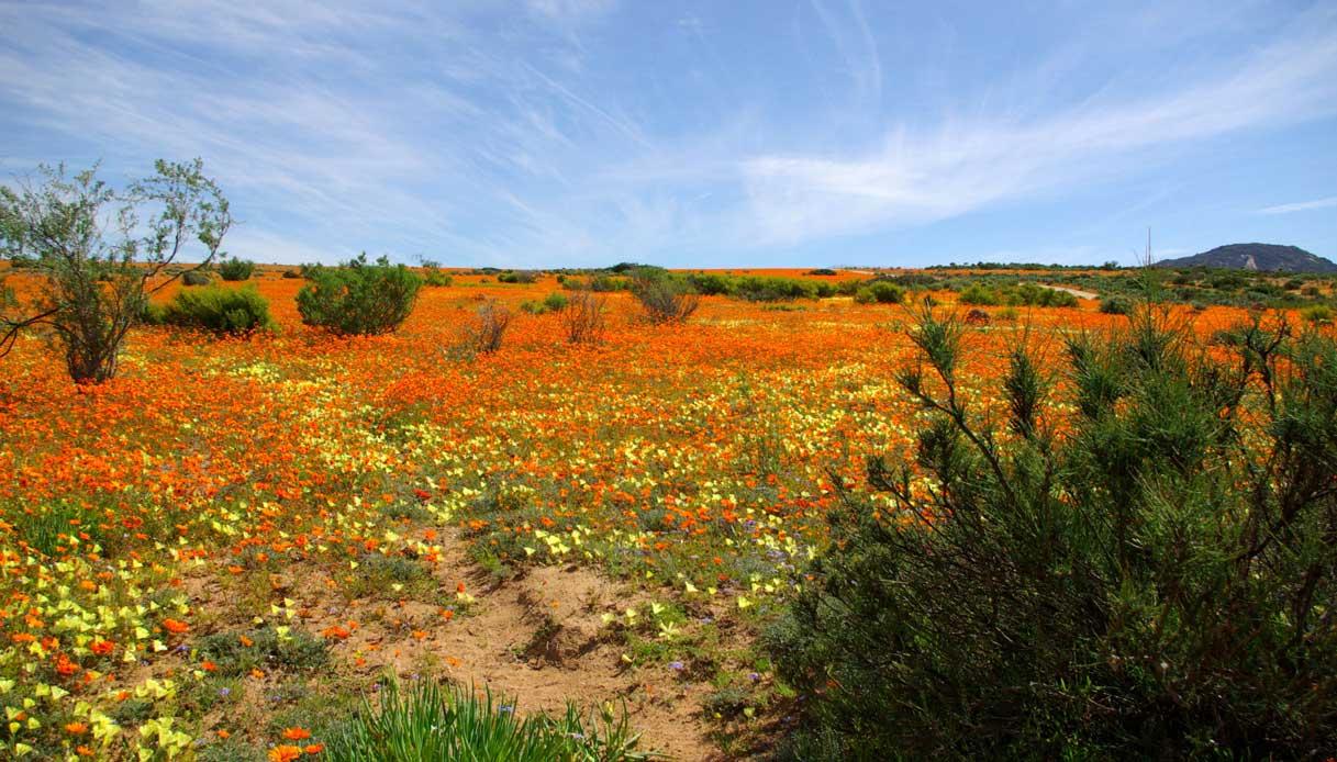 deserto-Namaqua-sudafrica-primavera